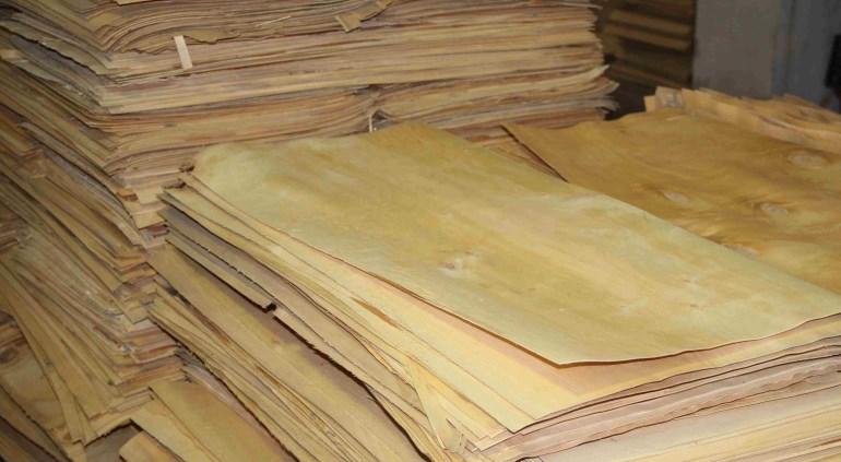 Так выглядит шпон, полученный в результате лущения древесины